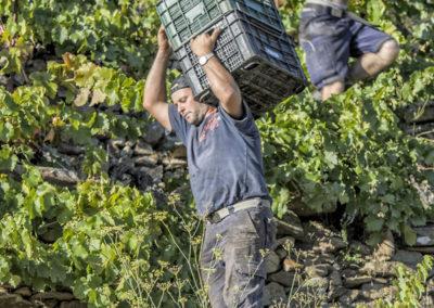 Viticultura Heroica